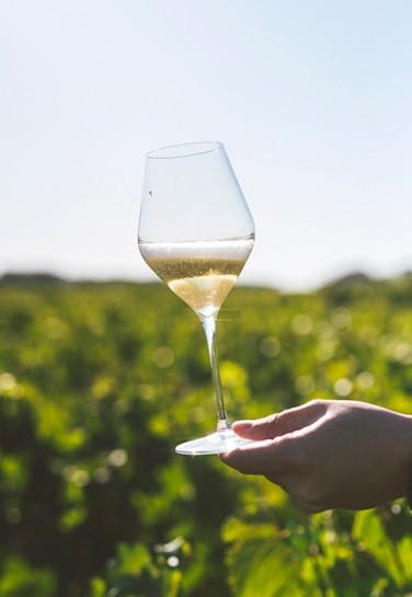 Sélection de Champagnes à petits prix